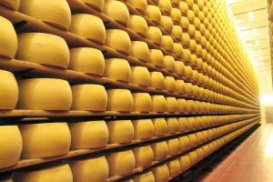 Room full of cheese (Photo source: profikaneten.hu)